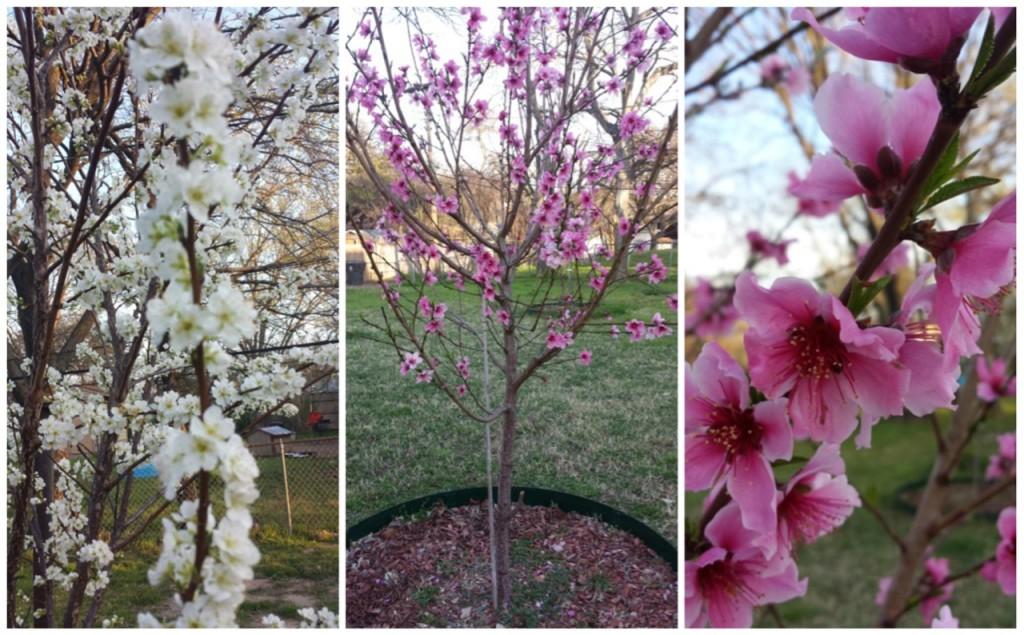 fruit treets (1)
